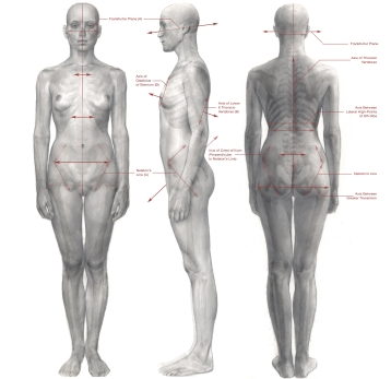 Anatomical lines of reference